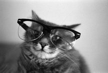 Funny&Lovely Cats