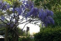 Tuin / Mijn tuin