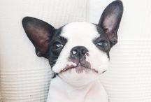 : puppies :