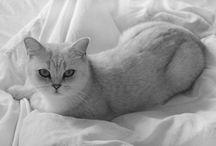 **Ötletek, praktikák napja** / Miért jó kedvencünkkel együtt aludni?  Három ok, amiért érdemes megfontolni, hogy kutyánkat, cicánkat beengedjük az ágyunkba: -          megállapították, hogy a macska ösztönösen ráfekszik arra a testrészre, ami fáj, dorombolása pedig fájdalomcsillapító hatással bír! -          szintén vizsgálatokkal bizonyították, hogy a kutyájukkal együttalvók kevésbé stresszesek, és a vérnyomásuk is alacsonyabb, -          kedvencünk jelenléte nyugtató hatással bír a felnőttekre és a gyermekekre egyaránt.