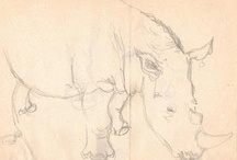 Rhino sketches / From the sketchbook of wildlife artist Sophie Neville