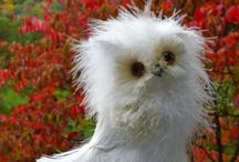 The Owl Effect / My top ten cutest Owls and Owl Inspirations