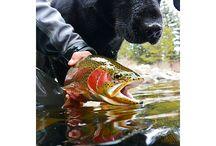 Fishing & Canoeing