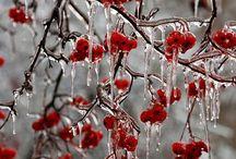 Winter-muse