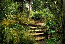 Garden ideas / by Angharad Jones