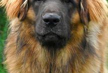 PERROS / DOGS / Imagenes de perros, de todo tipo de perros. Y todos son guap@s...