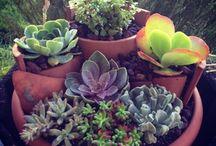 In the Garden... / Gardening