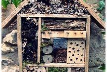 Enviro insect ideas