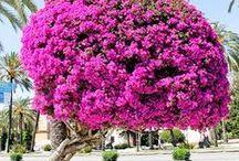 Natureza Flores e Cia