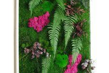 stabilized lichen