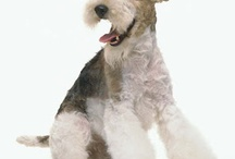I want a dog / My dream companion