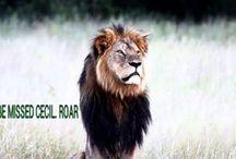 Petizione x Cecil