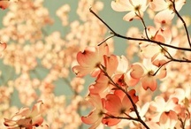 flores & nature