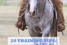 Ranch Horse Versitility