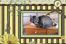 Mijn lo's met de katten. / Hier al mijn lo's met de katten , Bandit , Smokey en Mew.