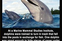 Dolphin  Interesting Facts