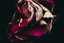 Flowers by Billy Kidd