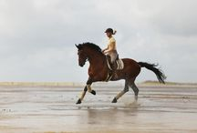 Blog 4 - Beach Horse and Family Shoot / Beach Horse shoot