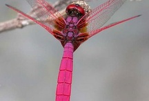 Dragonfly / by Cindy Yonkers Tutwiler