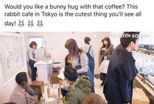 Travel - Japan