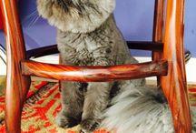Nossos gatos / Max Cavallera e Besourinho