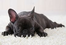 Four pads - dogs / Frenchies and more
