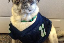 Pets Show Seahawks Spirit / People aren't the only 12s! / by Q13 FOX News Seattle