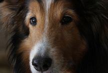 Ninas por ai.. / Shetland Sheepdog