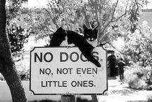 cat's / by Marina Escamilla