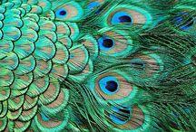 aqua, aquamarine, azure, teal, turquoise... / by P Cruickshank-Schott