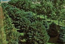 Trees and garden