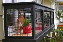 Catios & Cat Enclosures / Fun, safe outdoor spaces for Siberian cats and kittens!