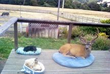 Dog&deer