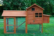 chicken coops / by Karie Dixon