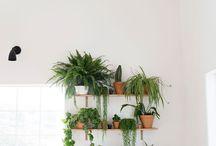 Indoor Plant ♡