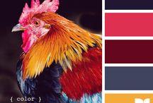 Fowl color palette / by Dializ arts
