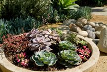 Garden / by Soap & Stone Essentials