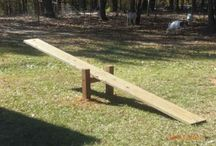 Pygmy goat obstacle course