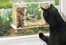 Pet Ideas / by Karen Pearce