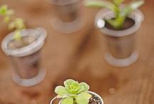 Mundo verde / Arranjos de plantas