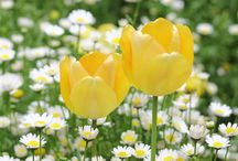 Spring - Jaro