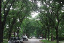 Winnipeg Streets