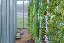 Greenhouses - Vertical Gardening / by Sheyne Reyzl