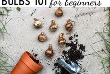 Bulbs for Autumn