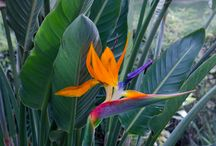 Naturaleza / Flores, plantas, animales...
