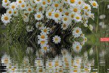 çiçekler..