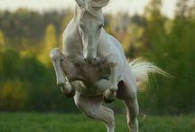 самые красивые животные