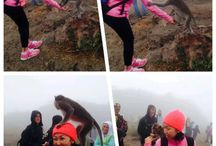 Mount Batur but no sunrise...happy with little cute monkey...