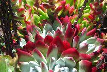 Flores - IP -