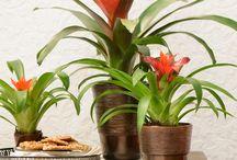 Classic coziness / Toepassingen met bromelia's voor het klassieke exterieur door bromelia specialist